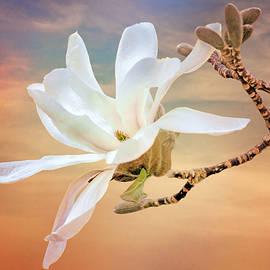 Nikolyn McDonald - Open Magnolia on Texture