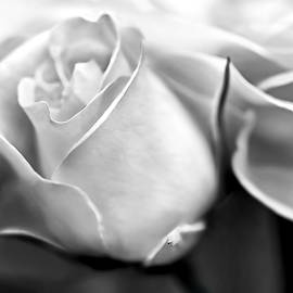 Jennie Marie Schell - Opening Rose Flower Black and White