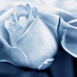 Jennie Marie Schell - Opening Rose Flower Blue