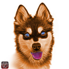 James Ahn - Orange Alaskan Klee Kai - 6029 -WB
