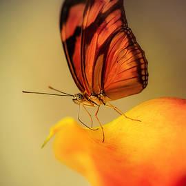 Jaroslaw Blaminsky - Orange and black butterfly sitting on the yellow petal