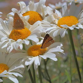 Rumyana Whitcher - Orange And White