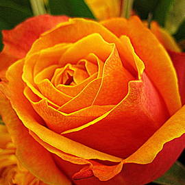 Bonita Brandt - Orange and Yellow Rose