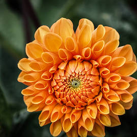 Linda Foakes - Orange Blossom
