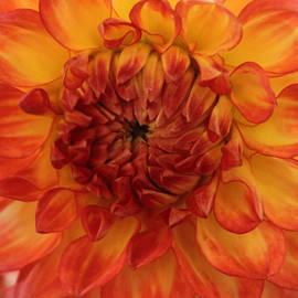 Arlene Carmel - Orange Bright