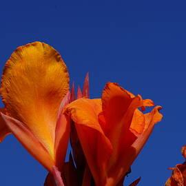 Carrie Goeringer - Orange Canna