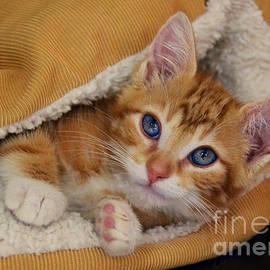Catherine Sherman - Orange Kitten Tucked Into Bed