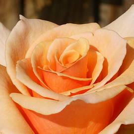 Torie Beck - Orange Cream