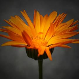 Richard Andrews - Orange Crush - Edit