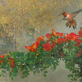 R christopher Vest - Orange Diagonal Rufous Hummingbird