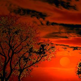 Bliss Of Art - Orange Eventide