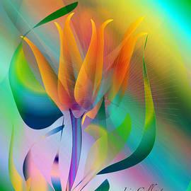Iris Gelbart - Orange Flower