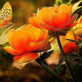 Lilia D - Orange flowers and butterfly