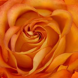 Ann Bridges - Orange Love