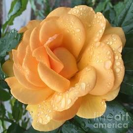 Nona Kumah - Orange Rain Drops