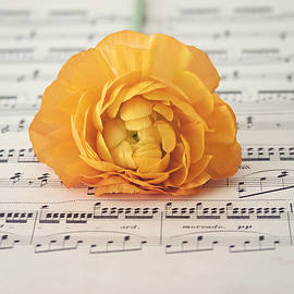 Kim Hojnacki - Orange Ranunculus on a music sheet