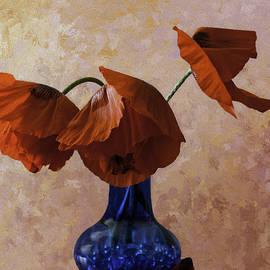 Diane Schuster - Orange Red Poppies in a Blue Vase