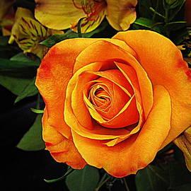 Bonita Brandt - Orange Rose