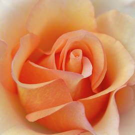 Patti Deters - Orange Rose Center