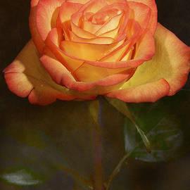 Larissa Martin - Orange Rose