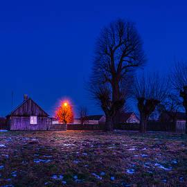 Dmytro Korol - Orange tree