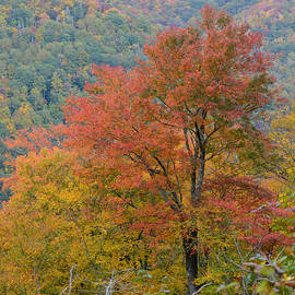 rd Erickson - Orange Tree of Autumn