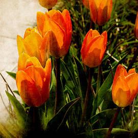 Milena Ilieva - Orange Tulips