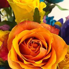 Wonju Hulse - Orange Yellow roses