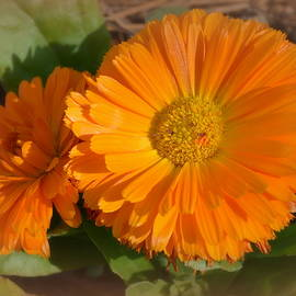 Linda Covino - Orange You Beautiful