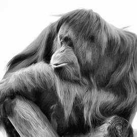 Lana Trussell - Orangutan