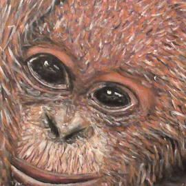 Robbie Nuwanda - Orangutan