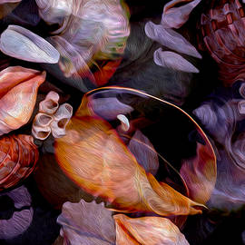 Lynda Lehmann - Orbiting Seashells