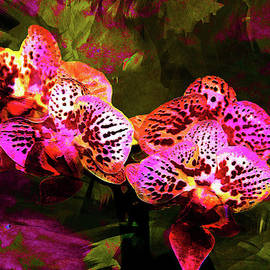 EricaMaxine  Price - Orchid 1a