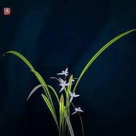 GuoJun Pan - Orchid 5