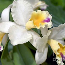 Terri Winkler - Orchid 8748