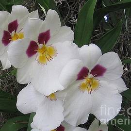 Photographic Art and Design by Dora Sofia Caputo - Orchid Beauties