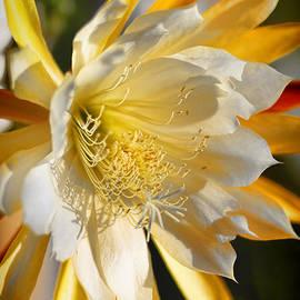 Mariola Bitner - Orchid Cacti Beauty