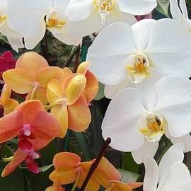 Charlotte Gray - Orchid Heaven