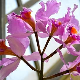 Sonali Gangane - Orchid Inflorescence