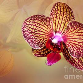 Judi Bagwell - Orchid