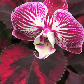 Frank Townsley - Orchid standout