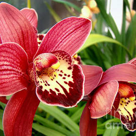 Sue Melvin - Orchid Standouts