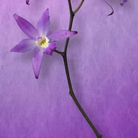 Cesar Palomino - Orchid Window