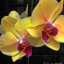 Donna Cain - Orchids Glowing