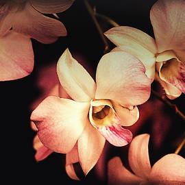 Debbie Nobile - Orchids in Bloom