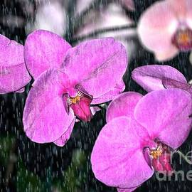 Nona Kumah - Orchids In The Rain
