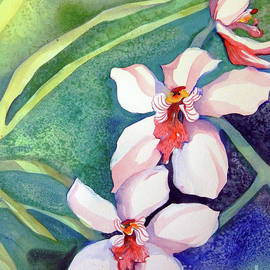 Sharon Nelson-Bianco - Orchids In The Wild