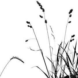 Paul Davenport - Organic Enhancements 10