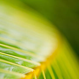 Sharon Mau - Organic Palm Frond Macro Maui Hawaii