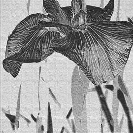Carol F Austin - Oriental Iris Flower Abstract